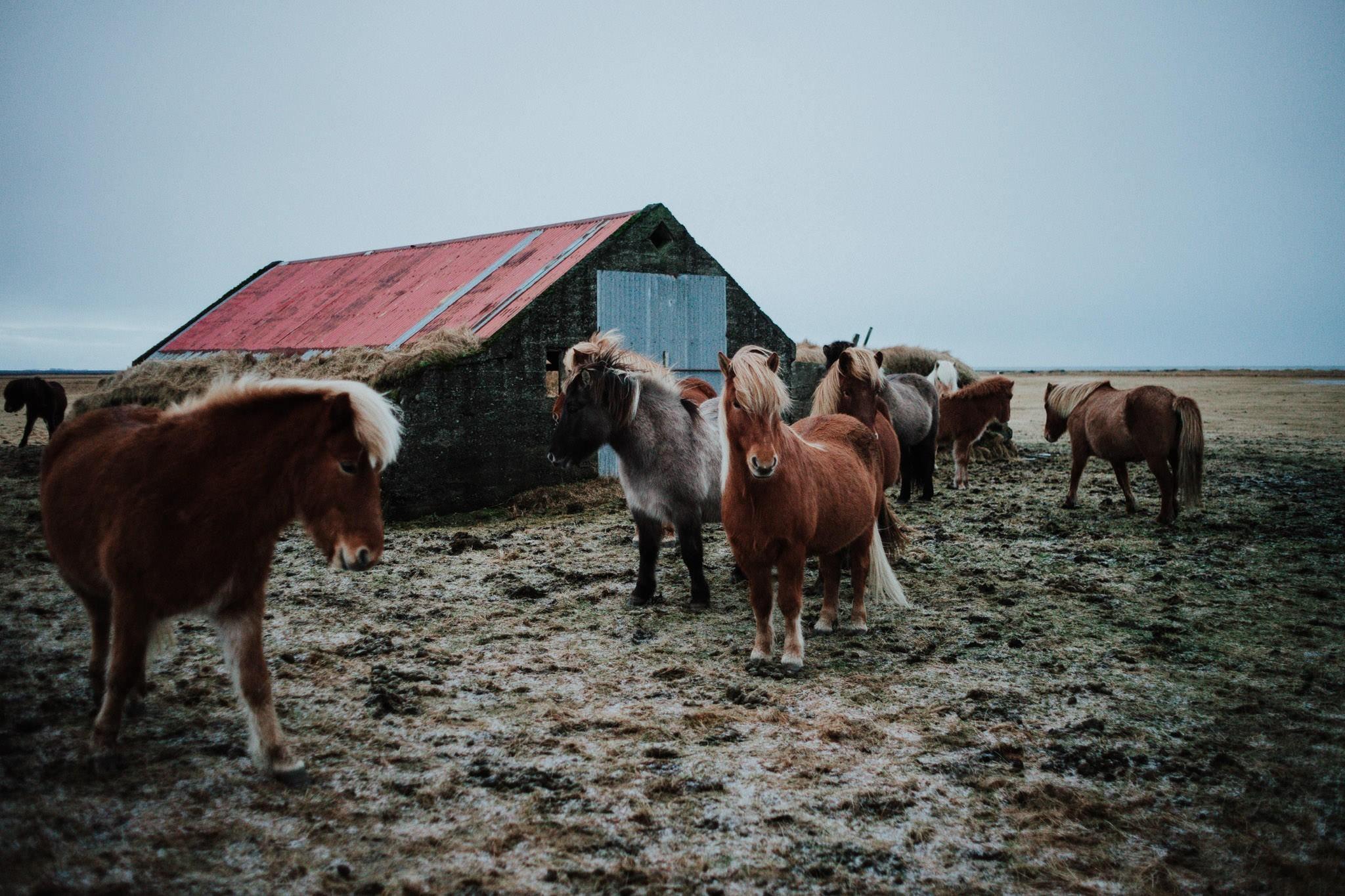 Eyvindarhólar, Iceland
